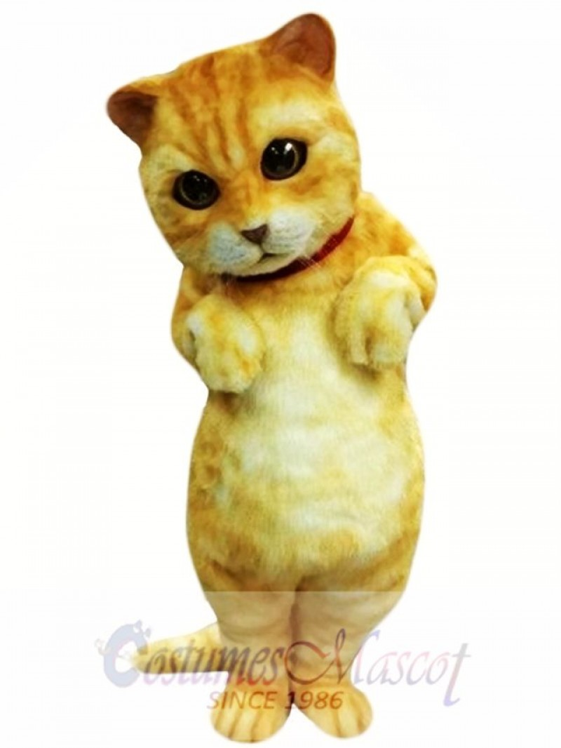 Cute Animal Cat Mascot Costume