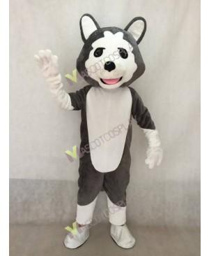 Realistic Adult Dark Gray Wolf Dog Mascot Costume
