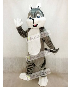 Cute Gray Husky Dog Mascot Costume