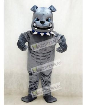 New Blue Eyes Grey Bulldog Mascot Costume